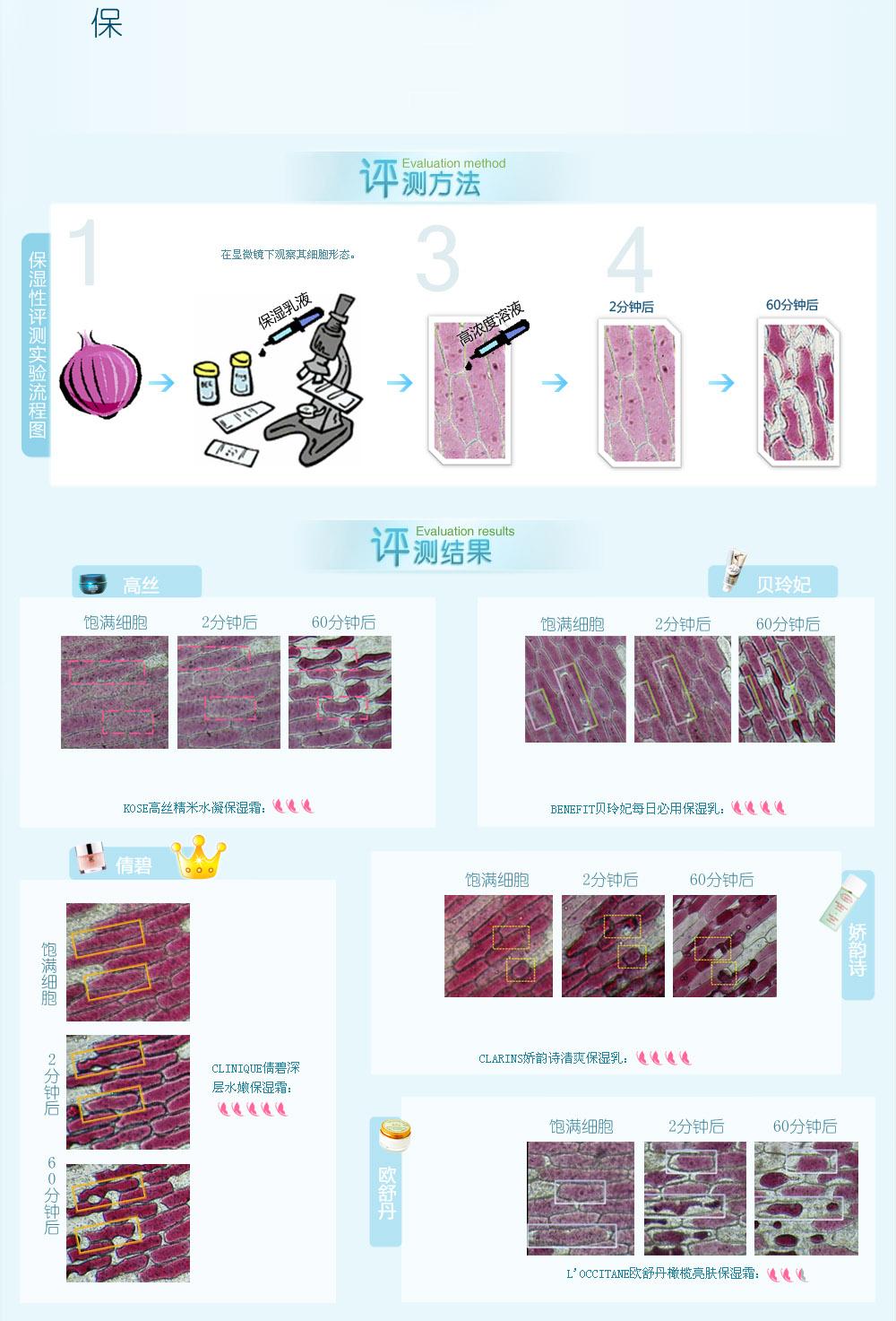 添加了保湿品的洋葱细胞基本形态不变,可见保湿品不会让洋葱细胞发生失水反应,理论上保湿品的保湿成分会让水分锁在细胞内。滴加高浓度溶液后,细胞会发生高渗反应,水分由低浓度流向高浓度,细胞由于失去水分而萎缩,形态发生改变,颜色也会加深,而有效的保湿成分会延慢这个过程。 通过实验图片可知,倩碧能让细胞基本保持原来形态,理论保湿性极出色;滴加了娇韵诗与贝玲妃的细胞只有少数的细胞颜色变深、缩小,理论保湿性较好;高丝和欧舒丹则不能很好的保护洋葱细胞,细胞发生失水反应,形态明显萎缩,颜色加深,这两款理论保湿性都一般。