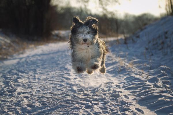 训练宠物猫的四个基本方法