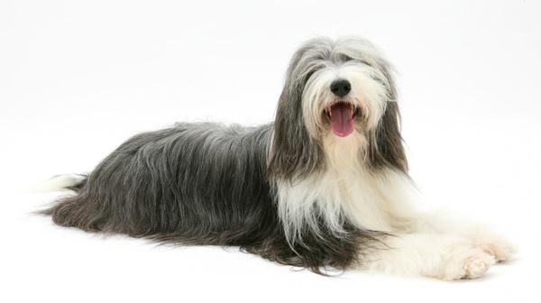 宠物狗狗摇尾巴的各种含义