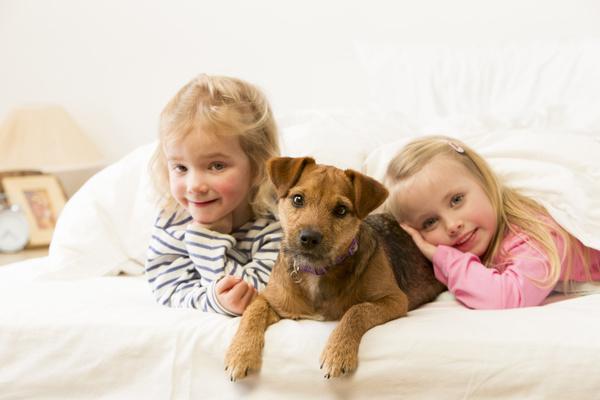 母犬发情期专业实用检查法