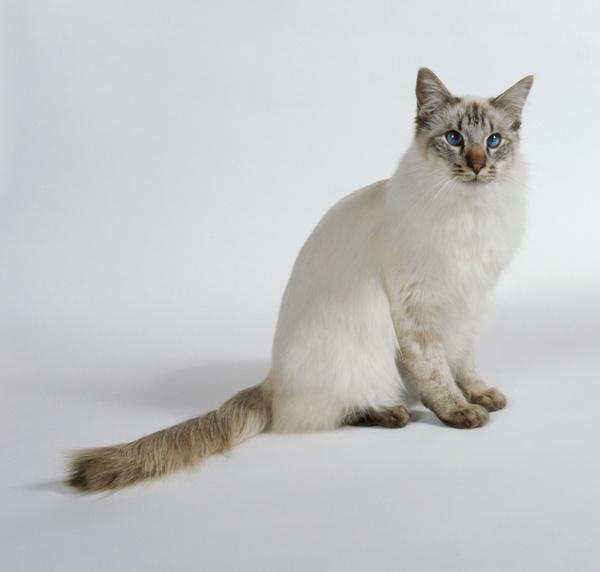 给短毛猫猫洗澡的六个步骤