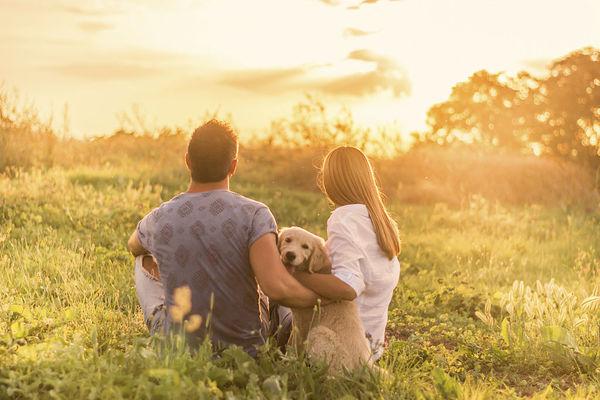 诊断狗狗健康程度的十指标