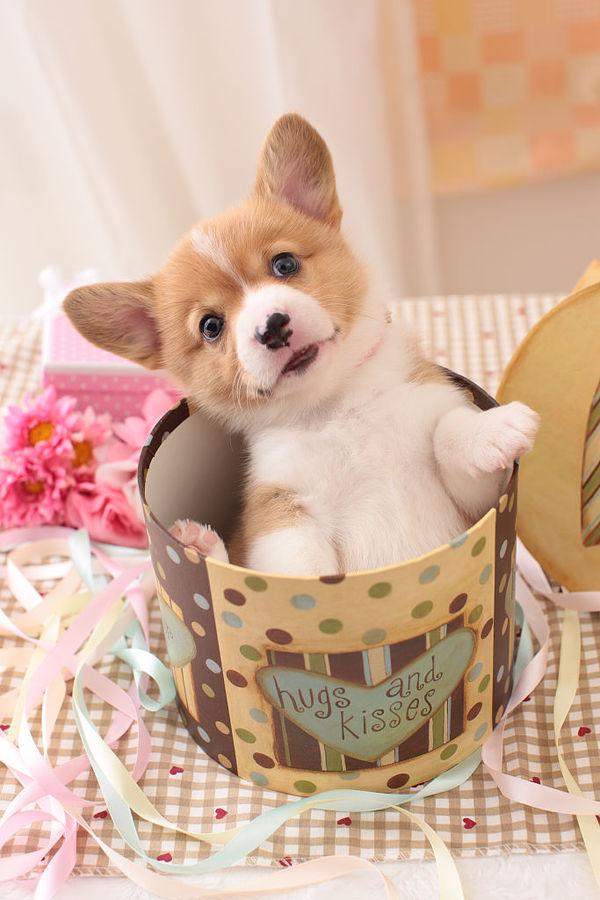 狗狗吃饭有哪些注意事项 狗粮
