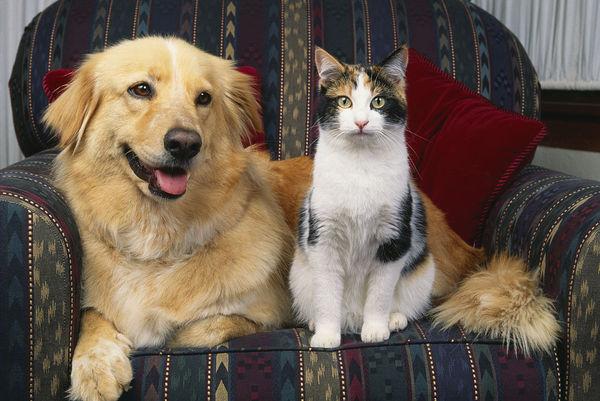 猫猫洗澡用品怎么选 喜马拉雅猫如何选沐浴露