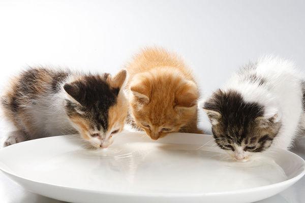 猫吃猫砂怎么办?有什么危害?