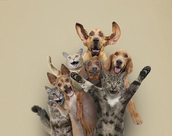 禁止宠物猫食用的三大食物