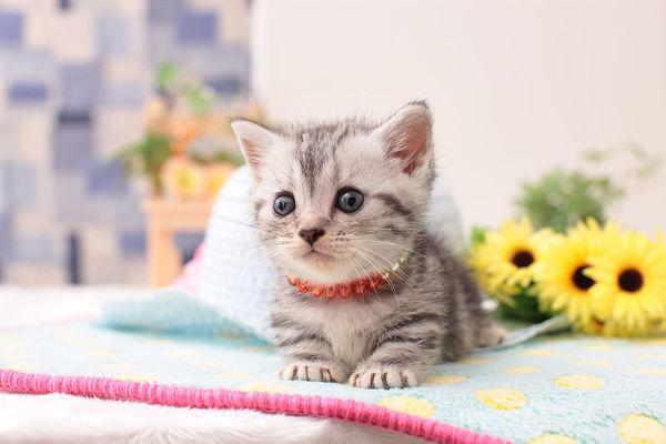 自制猫咪的鹧鸪鸡肝饭