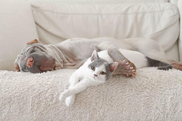 洗澡神器:让猫咪洗澡变得简单有趣